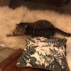 Entlaufene Katze